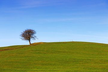 Ein Baum auf der Wiese von Frank Herrmann