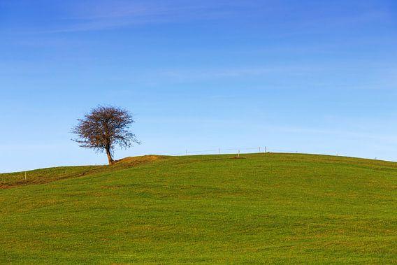 Een boom in de weide