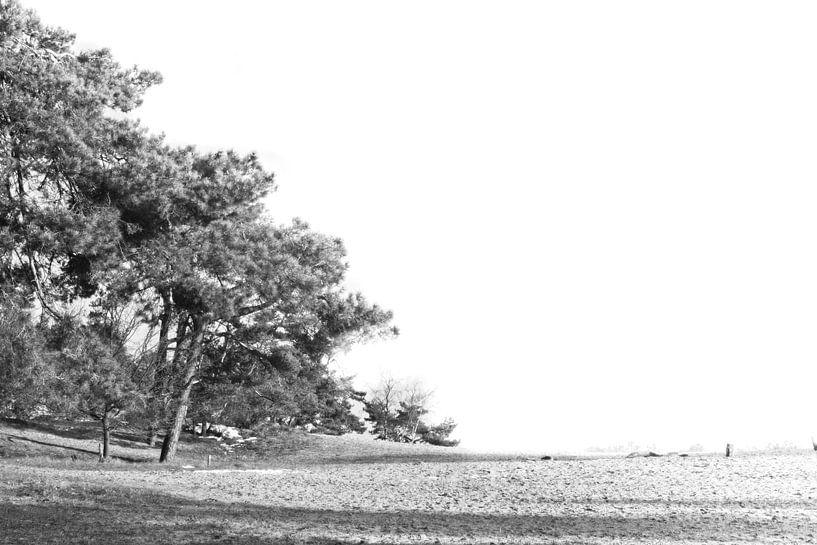 Loonse und Drunense Dünen von Dion de Bakker