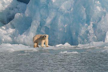IJsbeer voor Monaco-gletsjer van Peter Zwitser