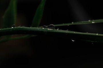 Wassertropfen von Noa Koorn