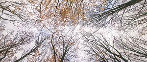 Herfstkleuren tot in de hemel van