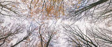 Herfstkleuren tot in de hemel van Gerrit Anema