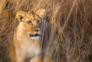 Leeuwenwelp van