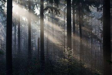 Solar-Harfen im Kiefernwald von Danny Slijfer Natuurfotografie