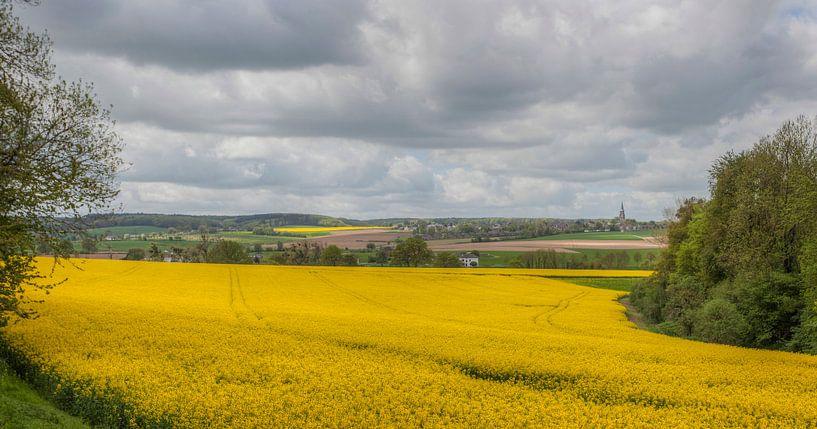 Koolzaadvelden bij Mamelis in Zuid-Limburg van John Kreukniet
