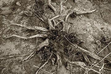 Holznadel von Eugene Winthagen