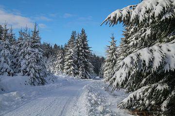 Winter Foto - Schneefoto - Ardennen von Pixelatestudio Fotografie