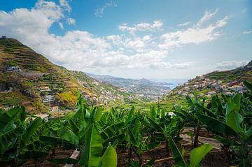 Banana plantage van Joris Pannemans - Loris Photography