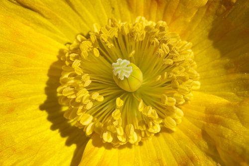 Hart van een bloem van