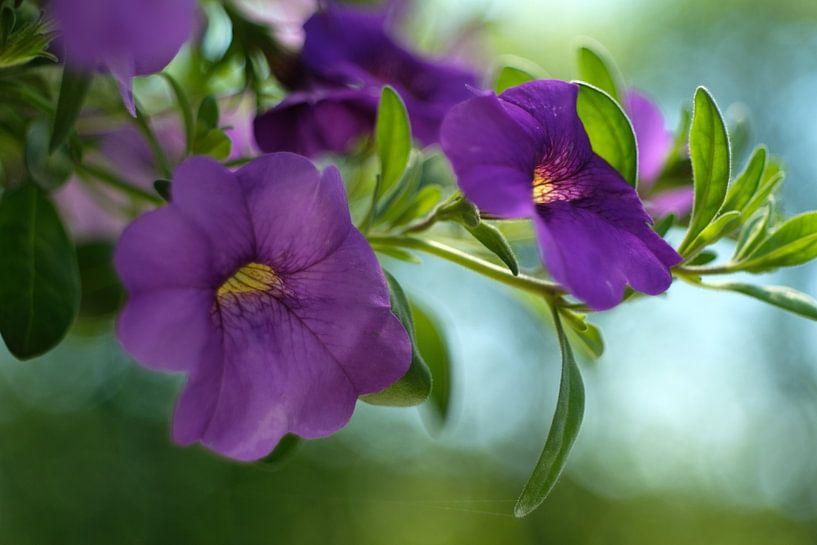 Paars bloemetje van Joke Beers-Blom