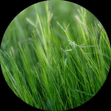 Green, green, grass of home van Herbert Seiffert