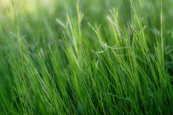 Green, green, grass of home