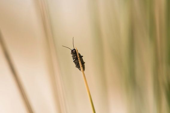Insect op helmgras in de duinen van Terschelling van Leon Doorn