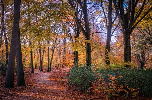 Wandelpad in prachtige herfstkleuren