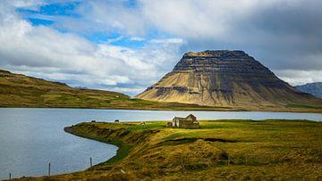 IJslandse paarden voor de Kirkjufell van Denis Feiner