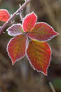 Herfstblad met rijp