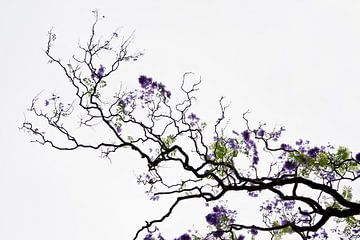 Dromerig paars en groen van Sense Photography