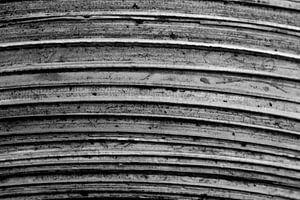 Le bois. Ancienne. sur Tosca Dekker - Fleury