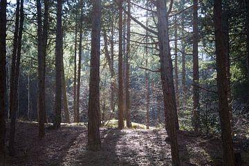 Licht door de bomen van Charlie Raemakers