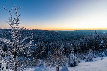 Winter in het Zwarte Woud van Werner Dieterich