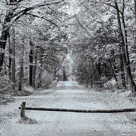 Herfst in zwart wit van Ingrid Aanen