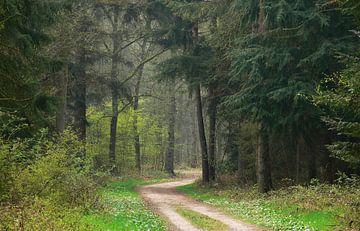 Bospad met Dennebomen van Corinne Welp
