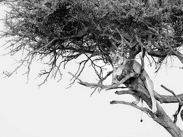 Lion grimpant aux arbres sur Marije Rademaker