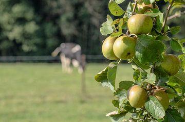 Koe met appels van Merijn Koster