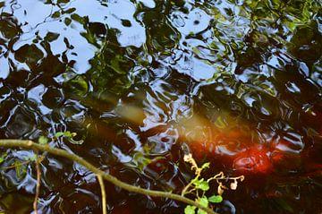 Spiegel der Natur von Susanne Seidel