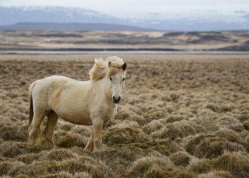 IJslander van