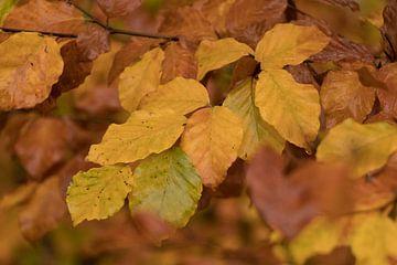 Herfstbladeren in goudgele tint van Marianne Twijnstra-Gerrits