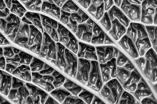 Macrofoto van Savooiekool (zwart -wit) van