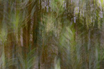 abstrakter Olivenbaum von Tania Perneel