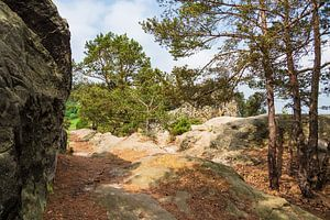 Landscape in the Harz area, Germany van
