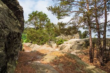 Landscape in the Harz area, Germany van Rico Ködder