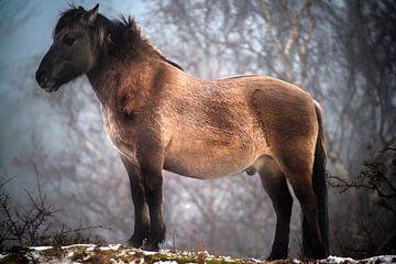 Paard in het wild van Fred Leeflang