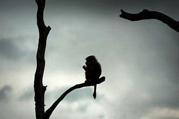 Silhouette eines Affen in einem Baum von Chihong