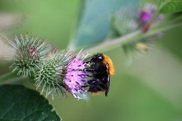 Vielbeschäftigte Biene von Shirley Douwstra