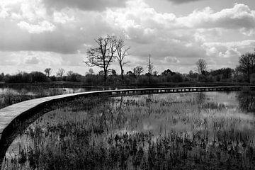 Bomen en reflectie in het water van Wytze Plantenga