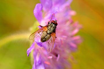 Schoonheid van een vlieg van Kor Brouwer