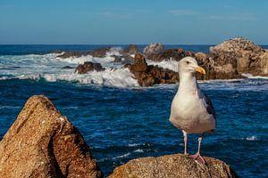 Zeemeeuw aan de kust van