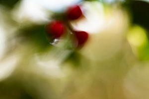 herfstbesjes van Detty Verbon