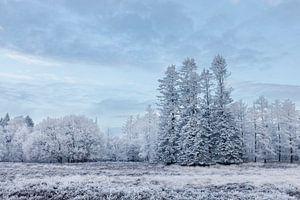 Witte bomen onder blauwe lucht van