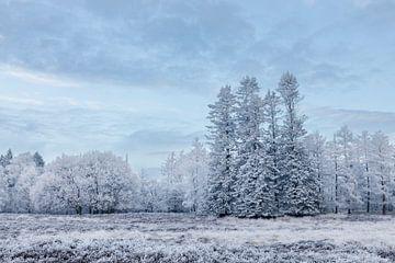 Witte bomen onder blauwe lucht