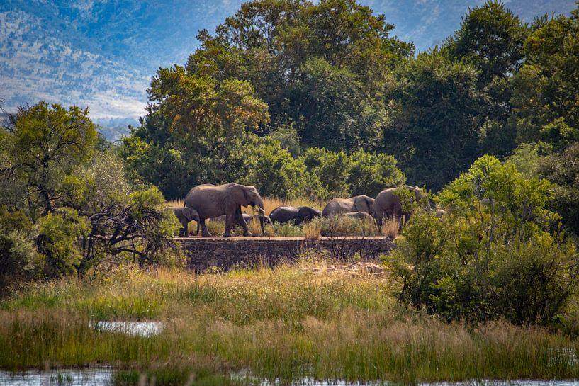 Elefantenherde, Südafrika von Mark Zoet