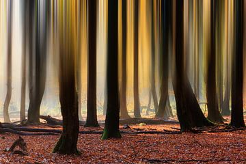 Verticale lijnen in het herfstbos van Dennis van de Water