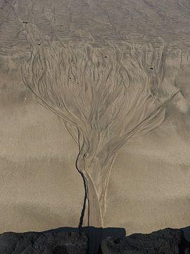 Boom in het zand sur Jasper H