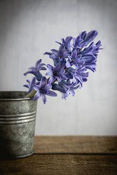 Hyacint in pot van Maaike Zaal
