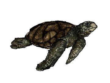 Schildpad van DominixArt